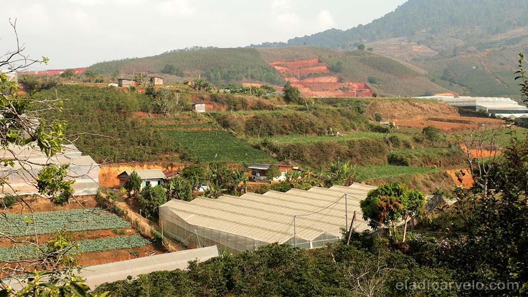 Coffee plantation greenhouses on the hills of Da Lat.